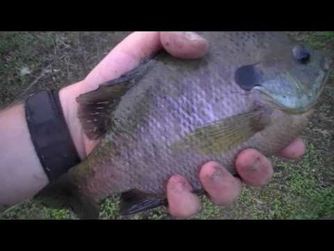 panfishing