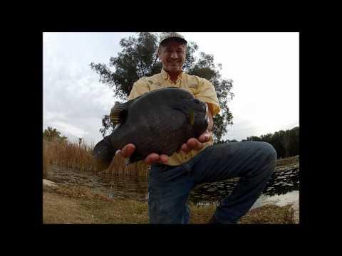Big Bluegill president Bruce Condello with a 3 pound bluegill