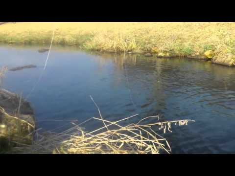 Fly Fishing for Brook Trout in Wisconsin