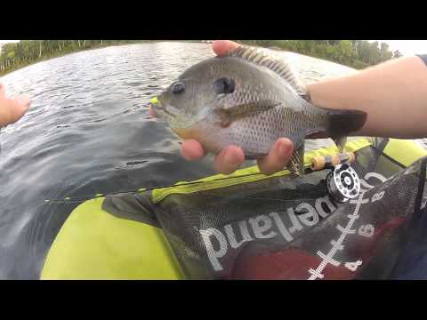 Panfish from the Abyss   1080p