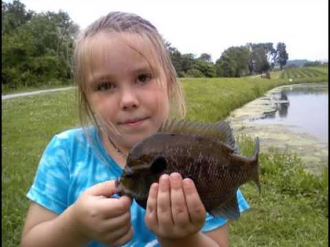 Big Bluegill part 2