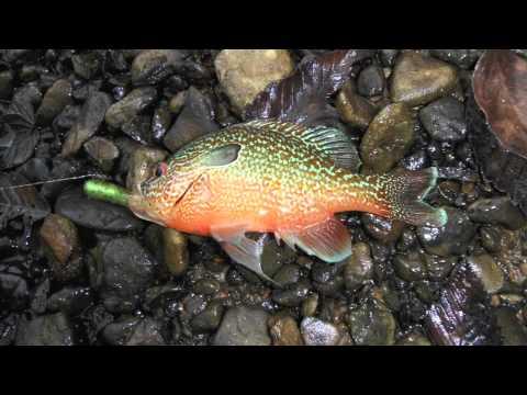 Fish of 2011