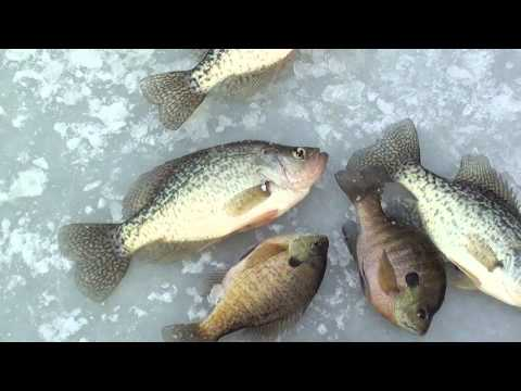 Ice Fishing With Chris Ludwig