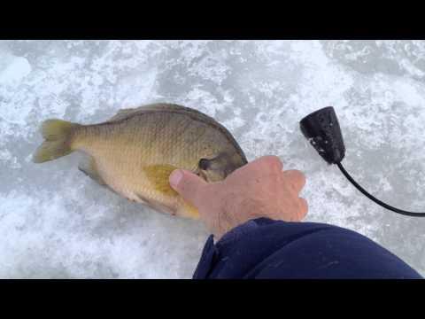 Big Bluegill-ice fishing
