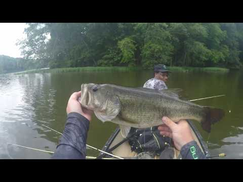 Largemouth Bass Topwater and 7LB Senko Bass!!