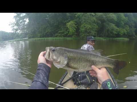 Largemouth Bass Topwater and 7LB Senko Bass!!