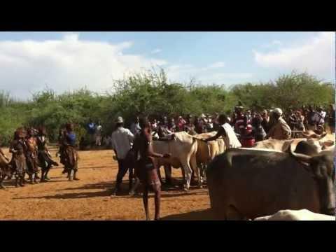 Bull-Jamping Hamer Ethiopia -Tour & Travel to Ethiopia with FANOS Ethiopia Tours