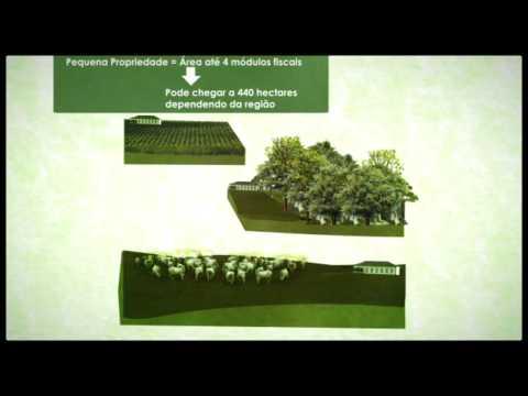 Código Florestal em perigo