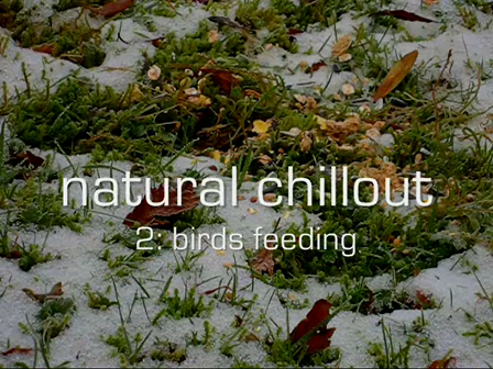 natural chillout - birds feeding