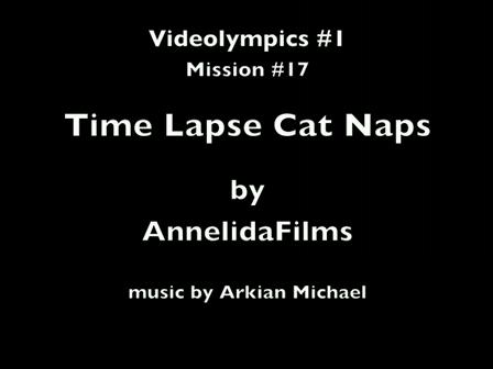 Videolympics 01.17: Time Lapse Cat Naps