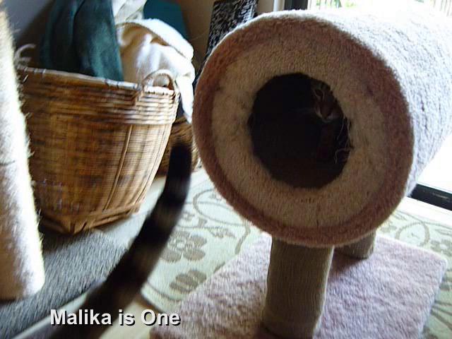 Malika is One
