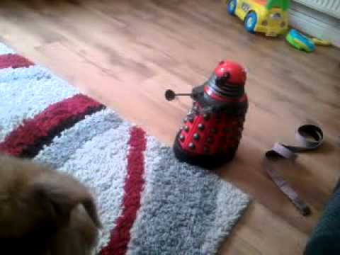 puppy vs 2011 dalek