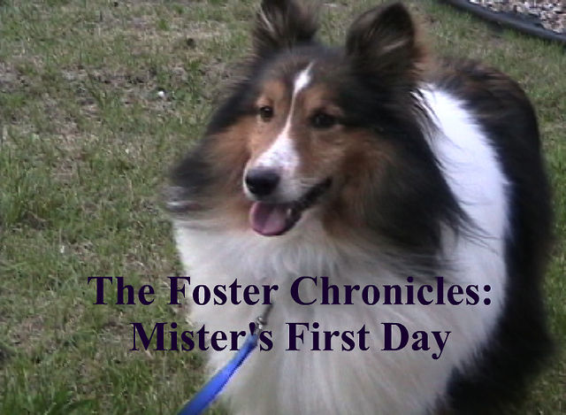 The Foster Chronicles: Mister's First Day