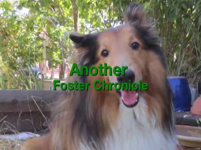 Another Foster Chronicle