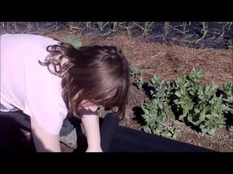 grow garlic grow pro