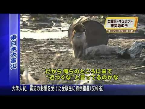 Tsunami - Cães a espera de resgate