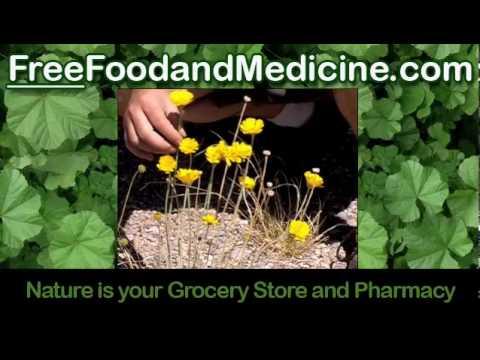 Wild Food Free Medicine
