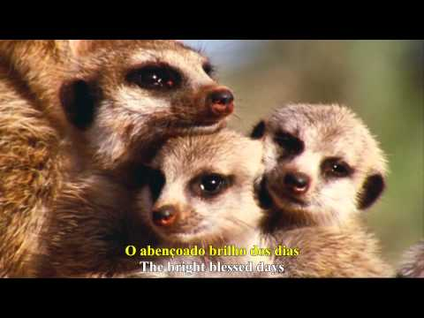 David Attenborough - What A Wonderful World (Legendado PT-BR) - Full HD