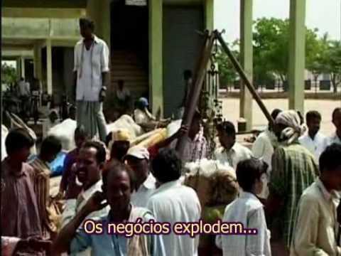 O desastre do algodão da Monsanto na Índia