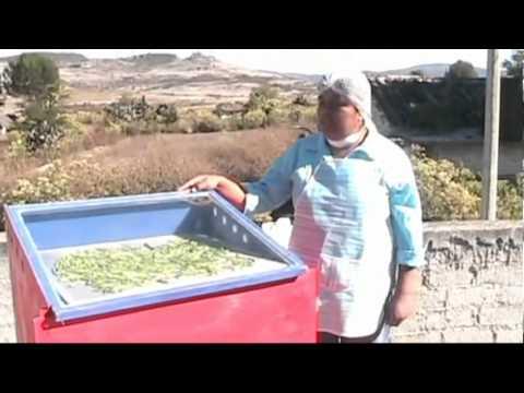 IMIFAP - Yo quiero, yo puedo: Nopales Deshidratados de Oaxaca