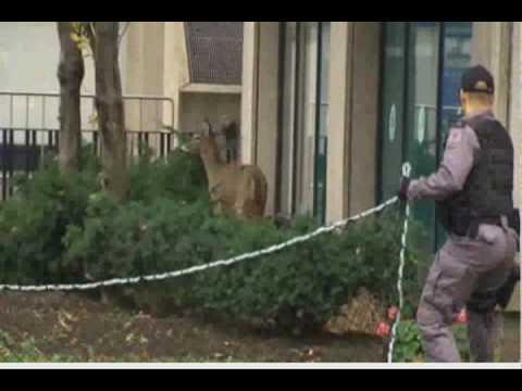 Terrorist Bambi