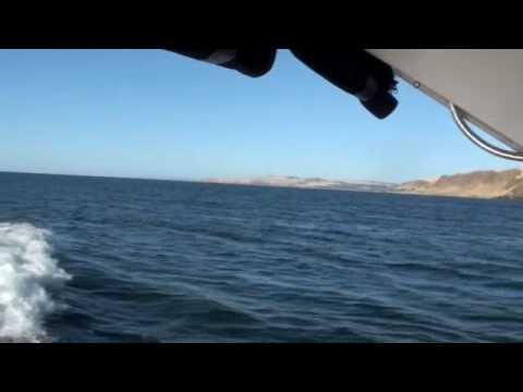 Boats, Bollinger & the Burpy's