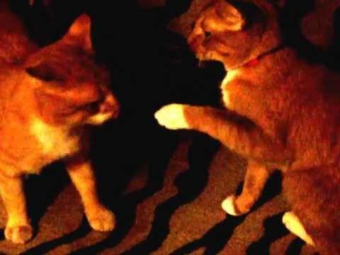 Felines Loving Like Humans