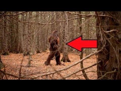 7 Most Believable BIGFOOT Sightings Video Footage of Yetti