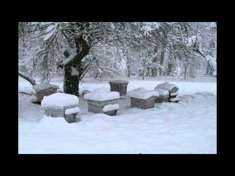 Permaculture et apiculture - rucher hiver 2010