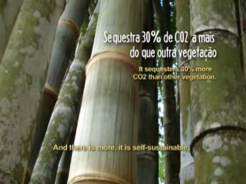 CRIS Sustentabilidade - CES - AlphaVille (LEG)
