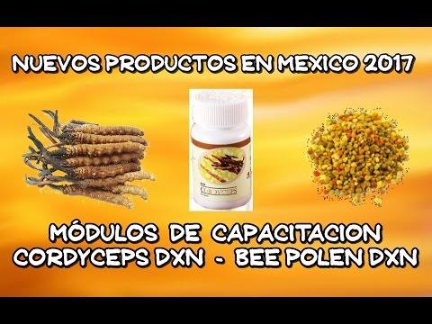 Videos Embajadores Del Ganoderma