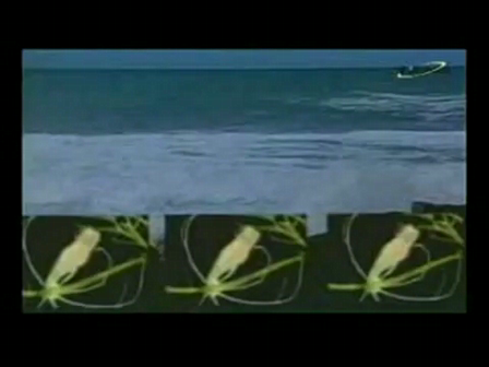 videoSpirulina