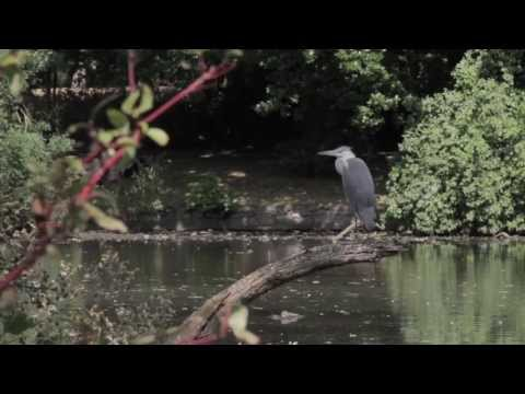 Broomfield Park - A Film by Christine Lalla