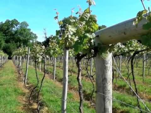 Bolney Wine Estate/Bookers Vineyards