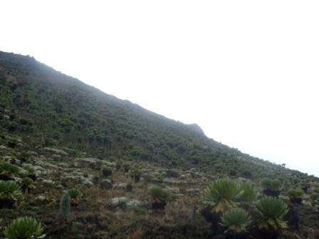 YHA-Kenya Travel, Mt Kenya Trekking tours,climbing mount Kenya,mountain adventures,