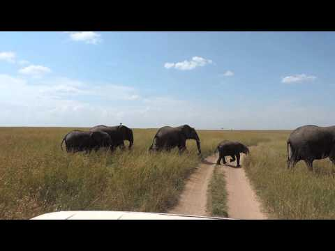 Masai Mara Adventure Budget Safaris -YHA Kenya Travel Tours & Safaris.