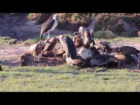 Vaultures, YHA Kenya Travel,Kenya Budget Adventure Camping Safaris.