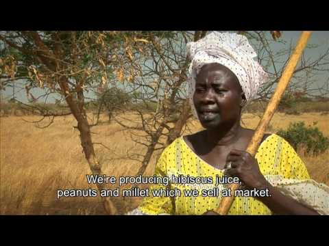 Turning the tide on desertification in Africa