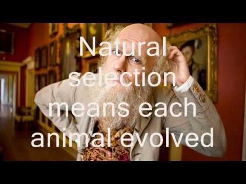 Horrible Histories: Charles Darwin Natural Selection (Lyrics)