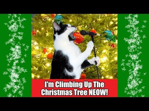 I'm Climbing Up The Christmas Tree NEOW 2013!