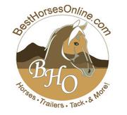 Best Horses Online
