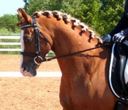 Dressage Horse Sales BC