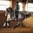 Guadanero AT PRE Stallion