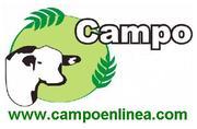 CAMPO EN LINEA