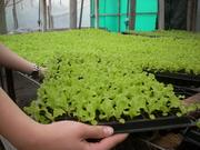 Plantulación La Ribera SAS