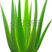 ALOE VERA GROUP (GENADIY)