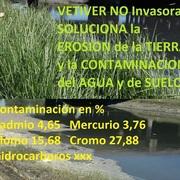 vetiver argentina