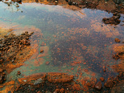 Anchialine Pools