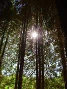 Marta Ficus