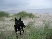 Ricki on vacation in Horumersiel, North Sea